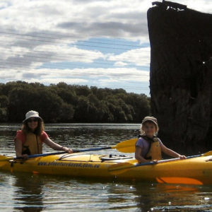 Up close with wrecks on the Dolphin Sanctuary Tour in Adelaide