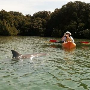 Adelaide Kayaking Tour, Dolphin Sanctuary for a Family of 4