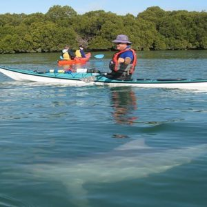 Kayaking Tour, Adelaide, Dolphin Sanctuary