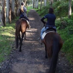 Glenworth Valley Horse Riding Tour, Fully Guided, Central Coast NSW