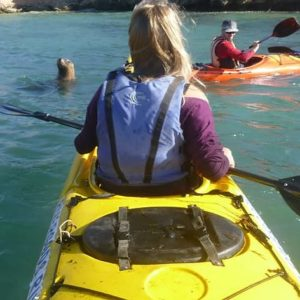 Seal & Penguin Island Kayaking Tour, Perth