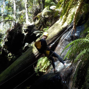 Abseiling on the Serendipity Canyon Tour, Blue Mountains Canyoning Tour