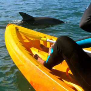 Byron Bay Kayaking Tour with Dolphins