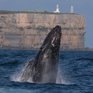Jervis Bay Whale Watching Cruise and Eco Tour