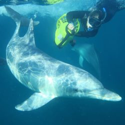 Swim with Dolphins, Perth, Wild Dolphin Experience
