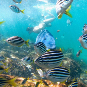 Manly Snorkelling Tour