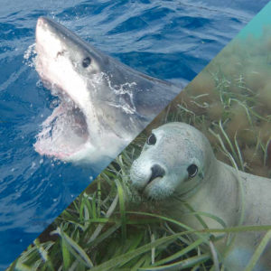 Shark Cage Dive and Sea Lion Swim Combo tour, Port Lincoln South Australia