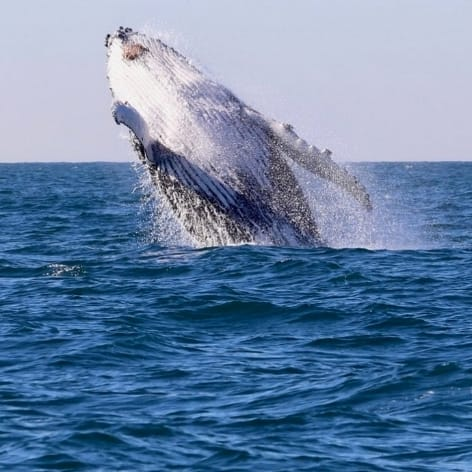 Newcastle Whale Watching Cruise