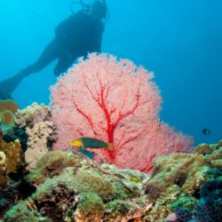 Muiron Island Dive and Snorkel Tour