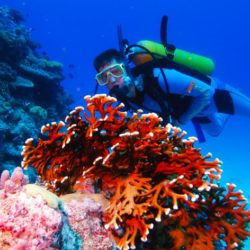 Great Barrier Reef Scuba Diving Day Trip