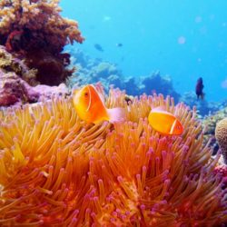 Great Barrier Reef Snorkelling Trip 1 Day from Townsville or Magnetic Island