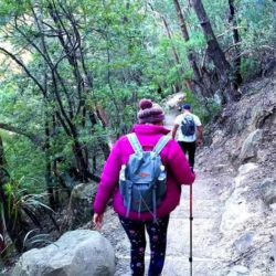 Blue Mountains Explorer, Bushwalking Day Tour