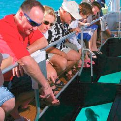 Green Island Full Day Cruise with Buffet Lunch, Cairns QLD