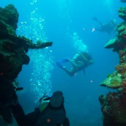 Moore Reef Certified Scuba Dive and Cruise Marine World Great Barrier Reef from Cairns