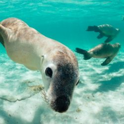 Jurien Bay Sea Lion Snorkelling Tour