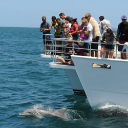 Dolphin Cruise on Jervis Bay NSW